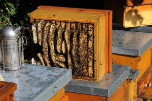 Bienenwaben Wildbau