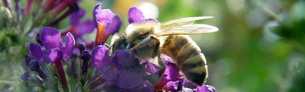 Maßnahmen zugunsten der Artenvielfalt und Naturschönheiten in Bayern